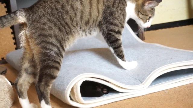 上に乗る猫