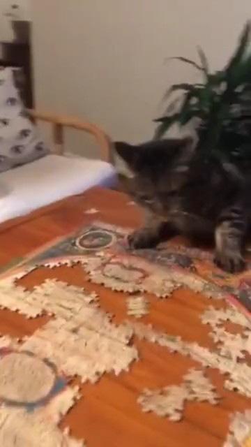 落ちていく猫