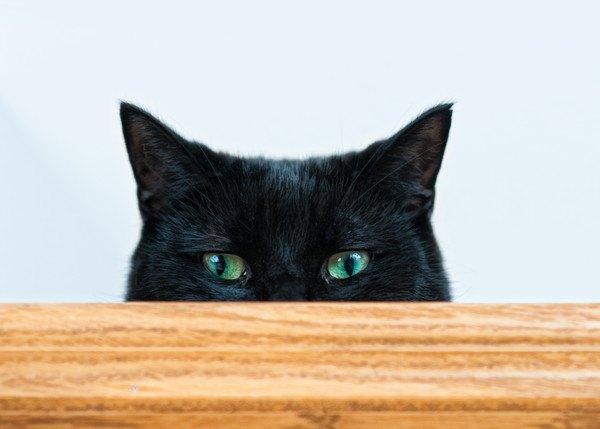 テーブルから見ている黒猫