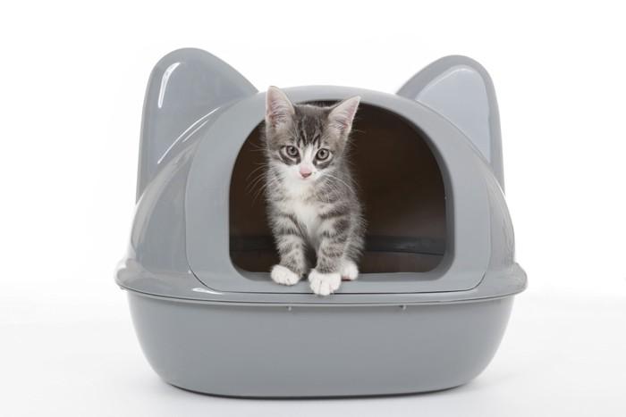 猫用トイレから顔を出す子猫