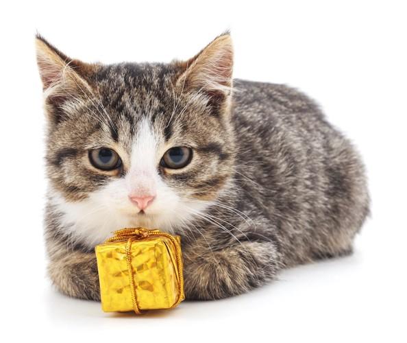 プレゼントの箱と子猫