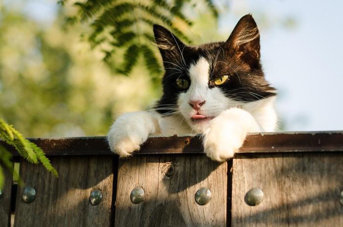柵から顔を覗かせる猫