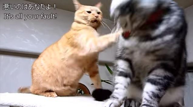 ケンカ中の2匹(猫パンチ)