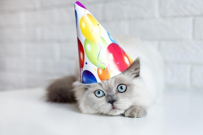 三角帽をかぶる猫