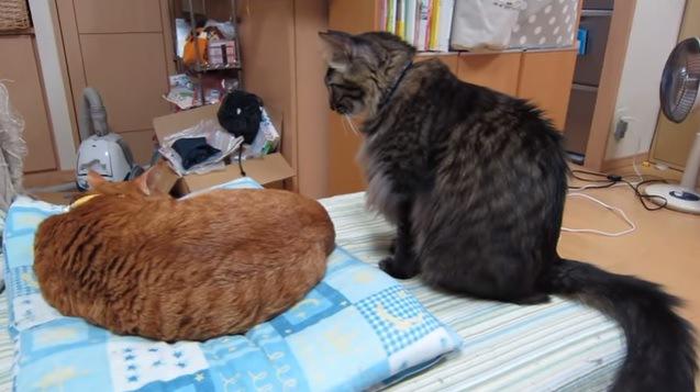 眠る猫と見つめる猫