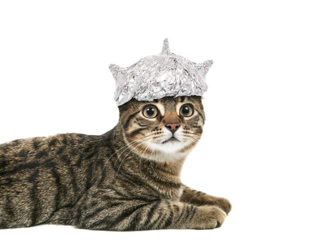 宇宙帽をかぶる猫