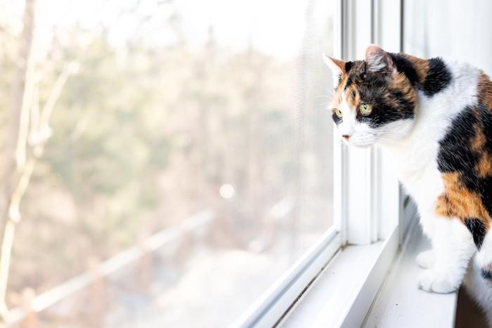 網戸越しに外を見つめる猫