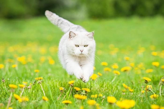 外で気持ちよい猫