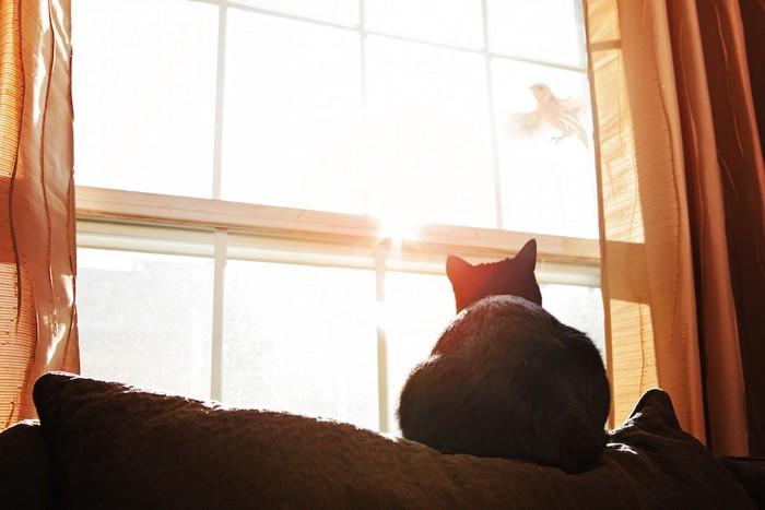 窓の外を飛ぶ鳥を見つめる猫