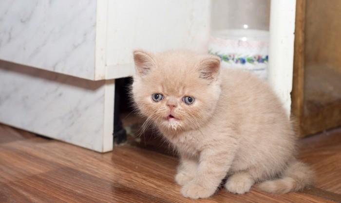 泣きそうな子猫