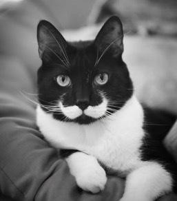 珍しい柄猫2