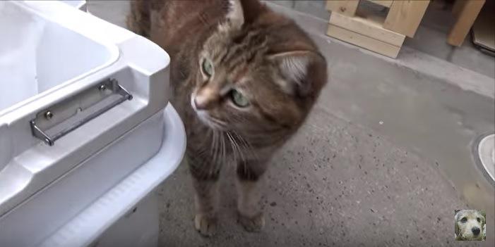 クーラーボックスを覗く猫