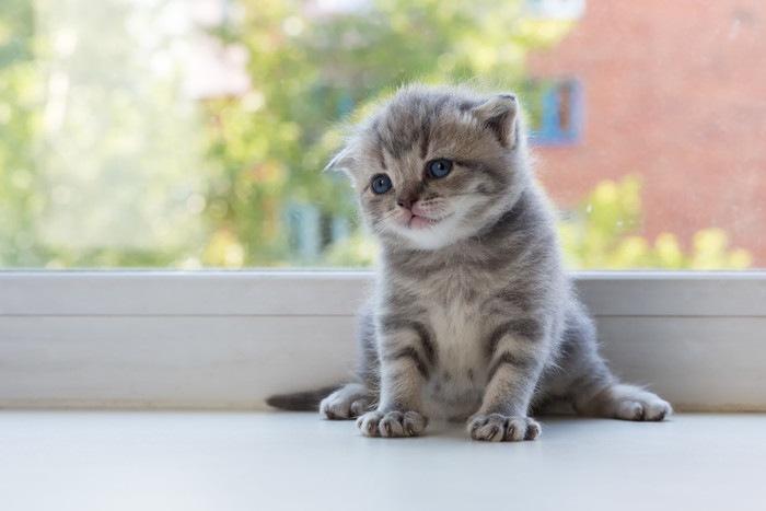 114401117 スコ子猫2