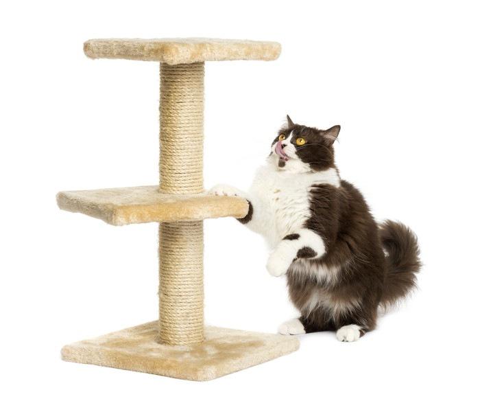 キャットタワーへジャンプする猫
