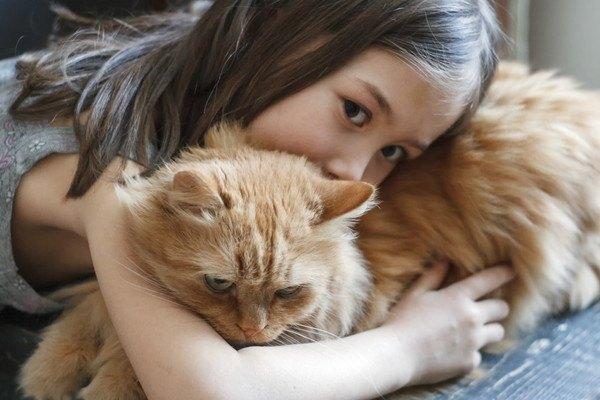 子供に抱き締められる茶色い猫