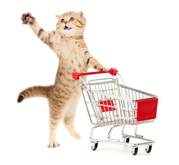 立ち上がって前足を上げる猫とショッピングカート