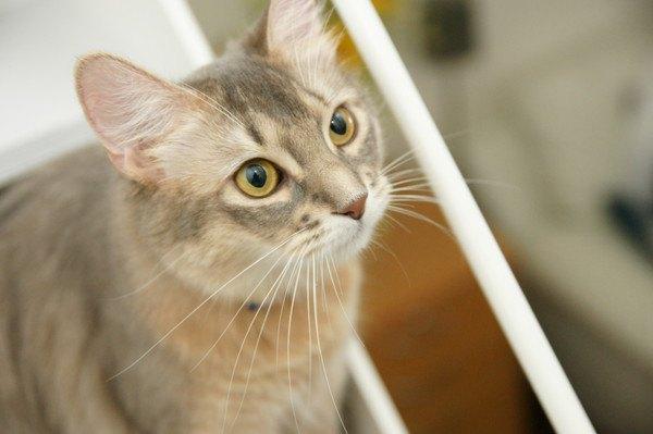 人見知りする猫