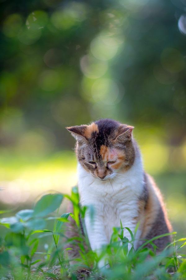 遠目でしょんぼりする猫