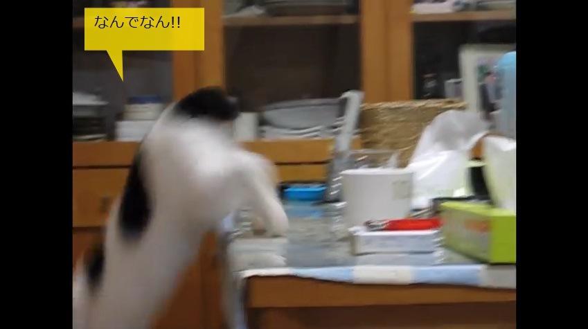 テーブルから飛び降りる猫