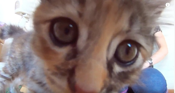 カメラを気にして近づく子猫