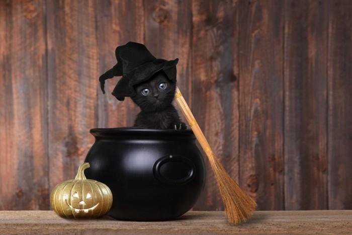 魔女の格好をした黒猫