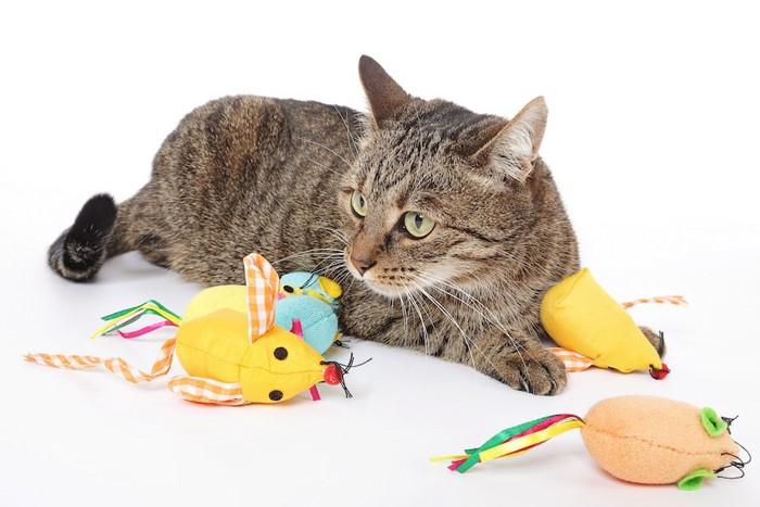 amazonにありそうなたくさんのネズミのおもちゃで遊ぶ猫