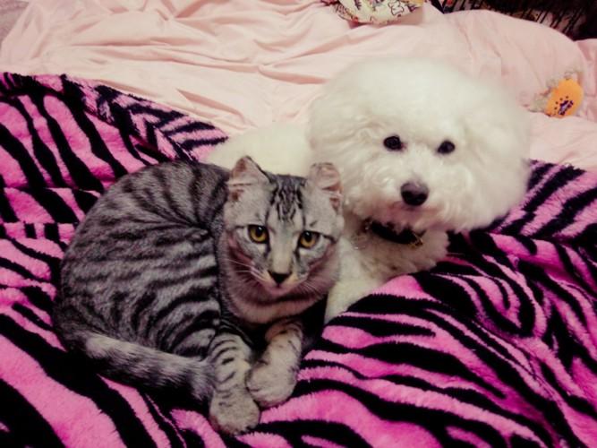 お互い座っている猫と犬