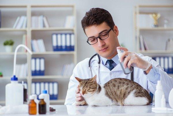 薬を拭きかけられる猫