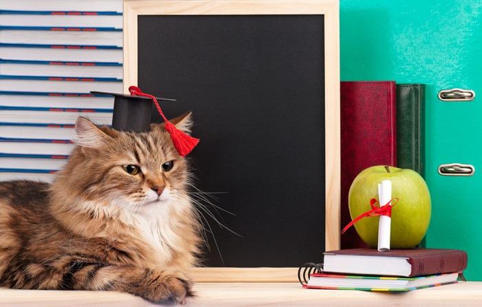 コスプレ猫の写真