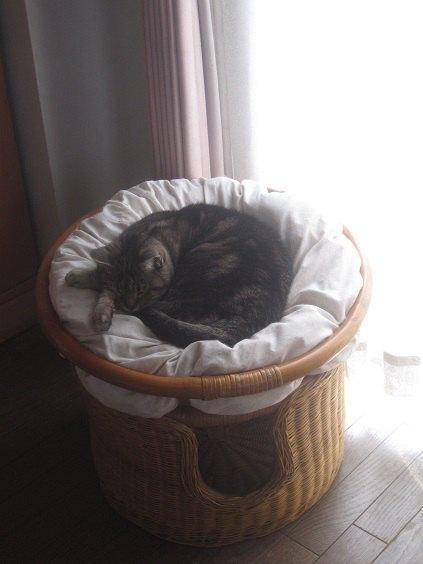 猫用ベッドのクッションの上で寝ている猫