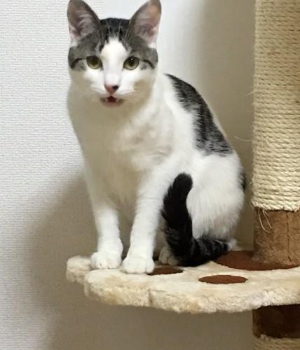 肉球柄の上に座る猫