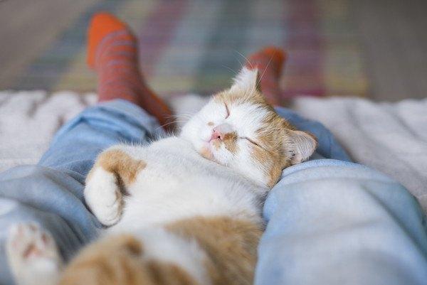 人の足で寝る猫