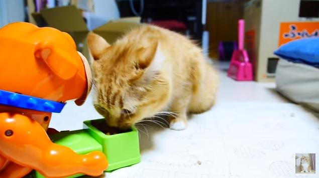 フードを食べようとする猫(前から撮影)