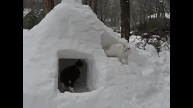 かまくらと2匹の猫