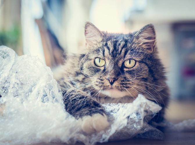 緩衝材と猫