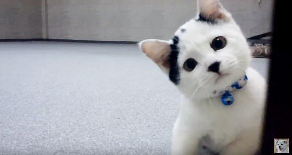 首を傾げる子猫