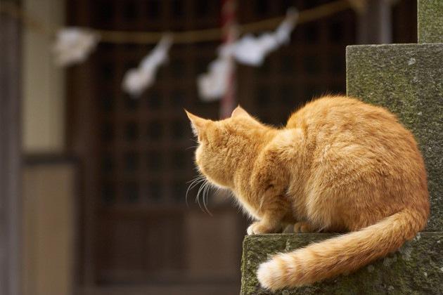神社と猫の後ろ姿