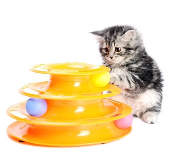 amazonにありそうな動くボールのおもちゃで遊ぶ子猫