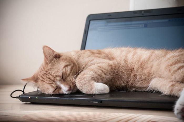 パソコンの上に乗って眠る猫