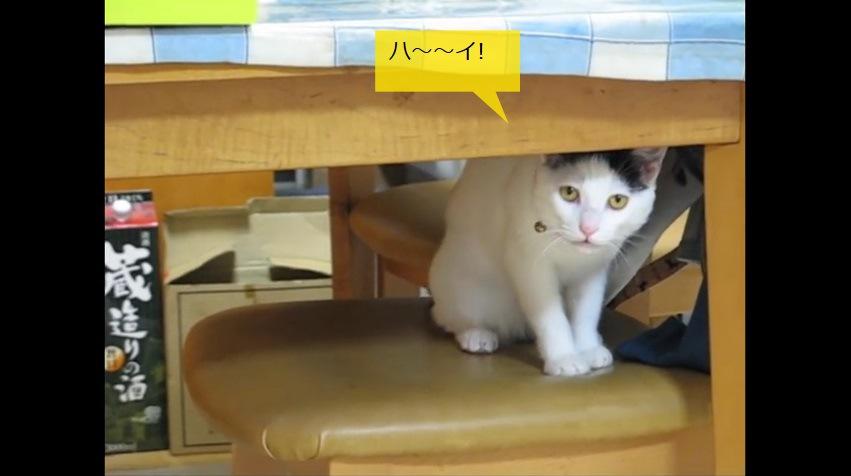 テーブルの下で返事をする猫