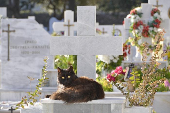 墓にいる黒猫