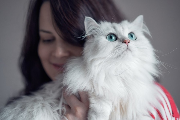 女性に抱かれて上を見つめるペルシャ猫