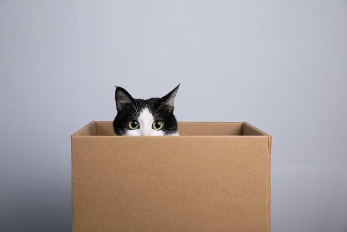 箱の中に入って顔を出す猫