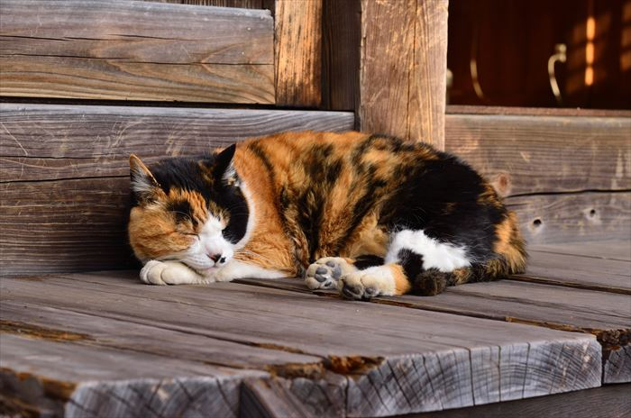 縁側で寝ている猫