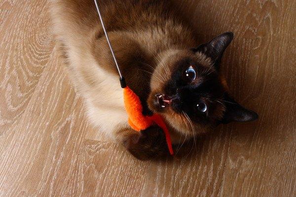 オレンジ色のおもちゃで遊ぶ猫