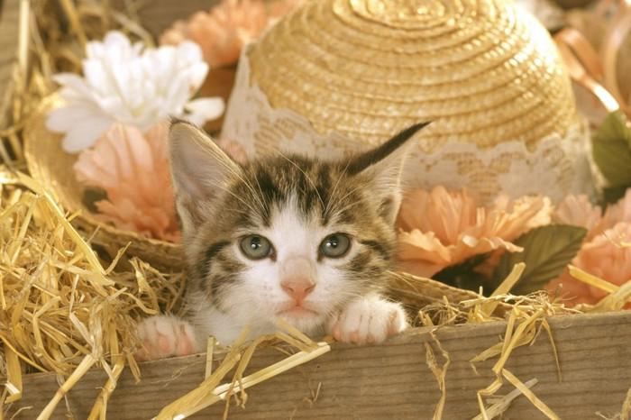 箱に入った帽子と子猫