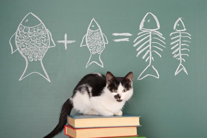 猫と黒板の魚のイラスト