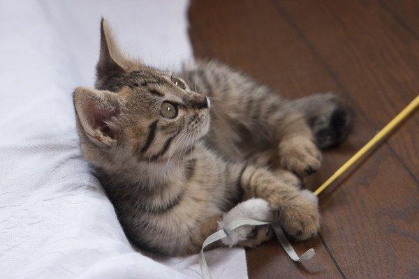 興味しんしんの子猫