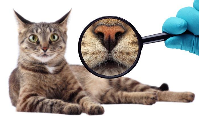 猫の鼻の虫眼鏡アップ