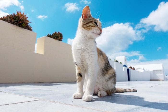 晴天の日の猫